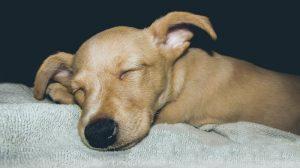 Pelech pre psa o spálne
