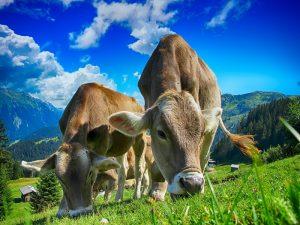 Výživa zvierat so skúsenosťami