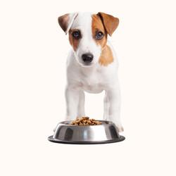 Výživa zvierat by mala byť pestrá